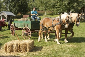 Fall Harvest Fair - Saturday @ Alexander Schaeffer Farm