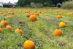 Fall Harvest Fair - Sunday @ Alexander Schaeffer Farm