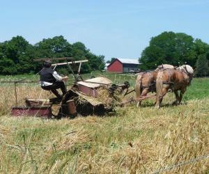 McCormick Deering Grain Reaper